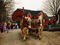 Jones Tree Farm Shelton Christmas In Connecticut